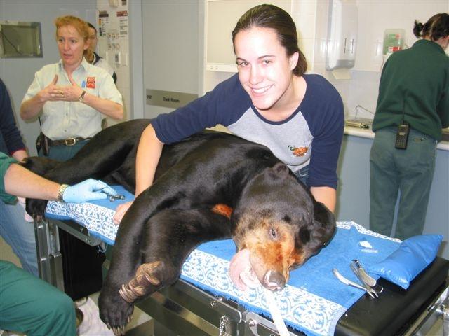 Bear at the Vet