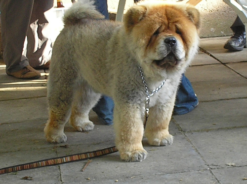 Dog And Lion Mix Breed